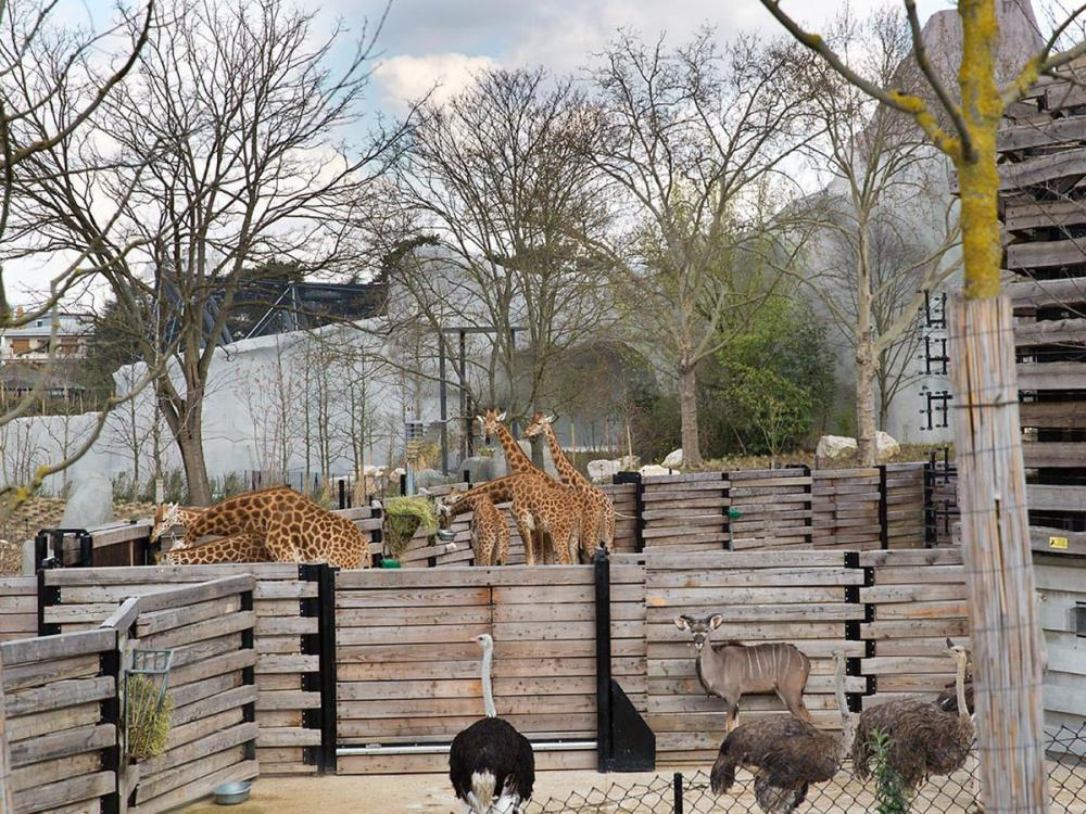 parc_zoologique_paris_4.jpg